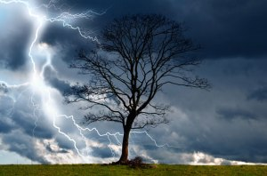 tree-and-storm-2
